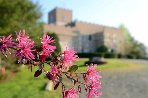 Springtime at Cavender Castle